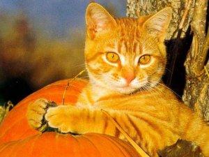 Кошка Лизонька